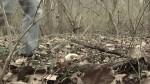 vlcsnap-2011-04-18-07h31m58s158